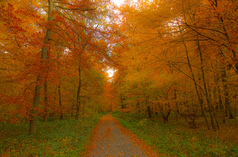 Autumn deciduous forest