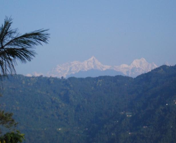K2 through pines
