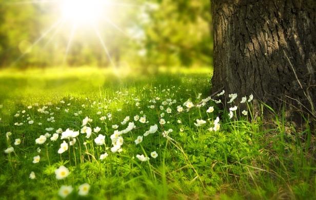 Spring, Navroz