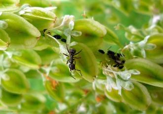ants- Public Domain Pictures