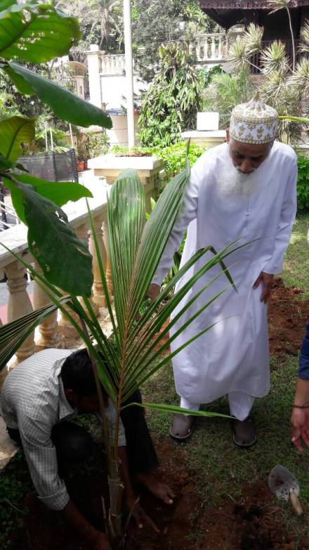 Tips For a Successful Tree Plantation Drive